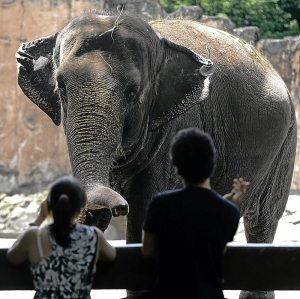 Visitors look at the then 35-year-old Mali at the Manila Zoo in June 2012