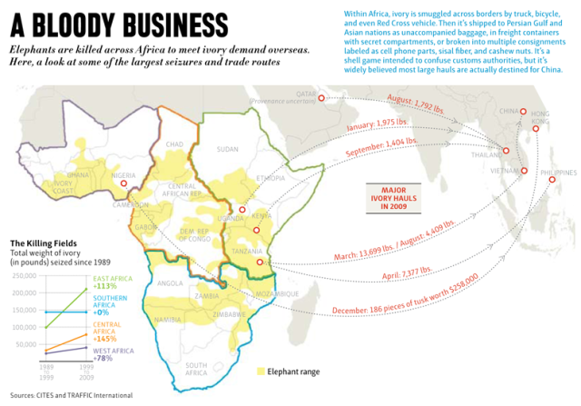 "The ""bloody"" business of the illegal ivory trade from Africa to Asia"