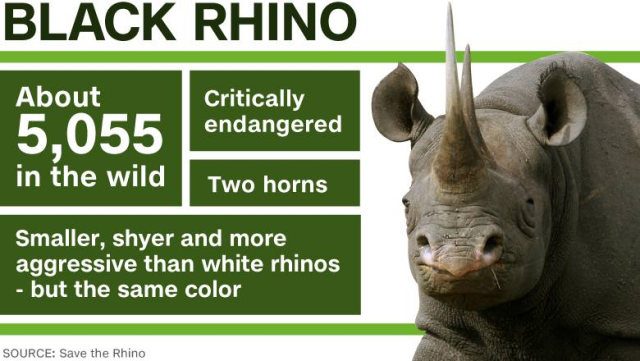 Infographic featuring Black Rhino Facts Source: CNN
