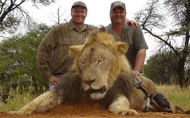 Walter J Palmer is notorious for killing large and endangered animals and has been fined for poaching in the past