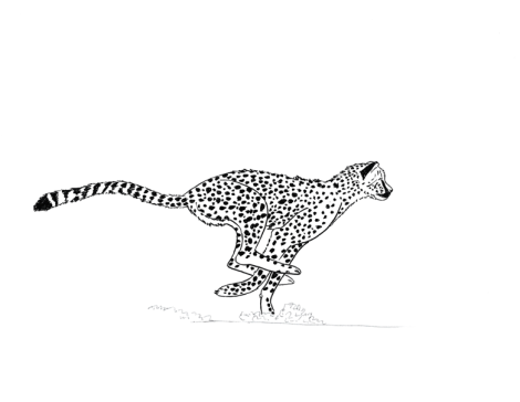 Cheetah_art_small